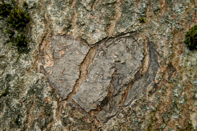 A heart carved in a tree
