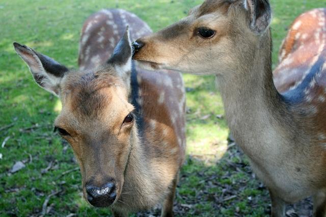Klotti Wild- und Freizeitpark