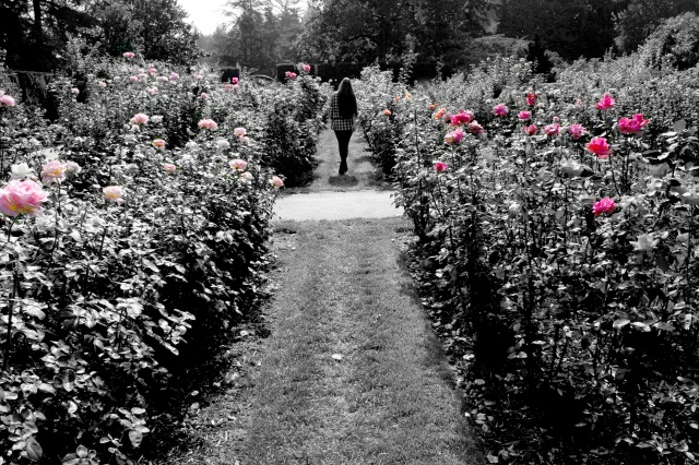 Rose Garden Portland Oregon