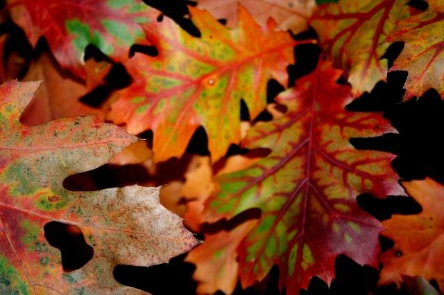 Fall in Portland, Maine