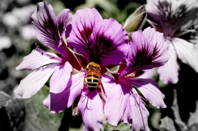Botanical Garden San Francisco