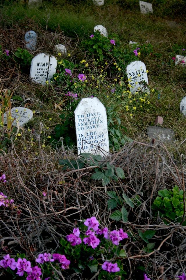 San Francisco Pet Cemetery Presidio